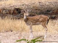 Deer - Visit Bihar Tour