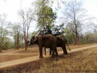 Elephant Safari Tour by Visit Bihar