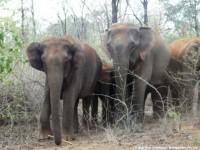 Elephant Tour - Visit Bihar