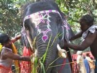 Elephant - Visit Bihar