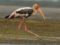 Migratory Birds - Visit Bihar Eco Tour